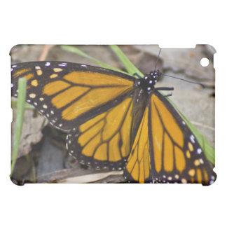 Coques iPad Mini Papillon de monarque