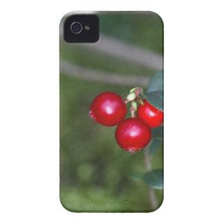 Coques iPhone 4 Case-Mate Baies d'une airelle sauvage (vaccinium vitis-ide