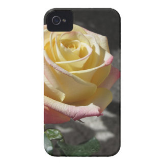 Coques iPhone 4 Case-Mate Fleur simple de rose jaune au printemps