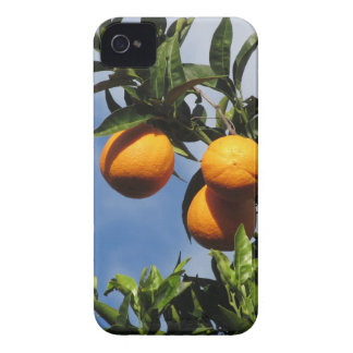 Coques iPhone 4 Case-Mate Fruits oranges accrochant sur l'arbre contre le