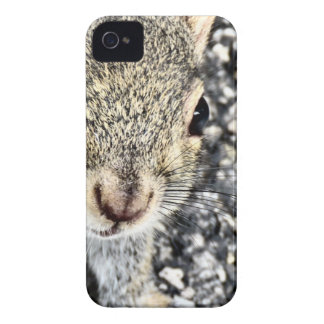 Coques iPhone 4 Case-Mate Haut étroit d'écureuil !