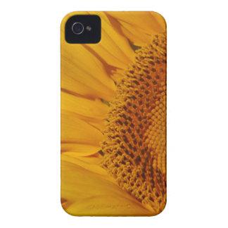 Coques iPhone 4 Case-Mate Le tournesol et sa signification