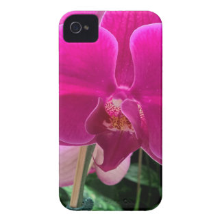Coques iPhone 4 Case-Mate Photographie d'orchidée de roses indien