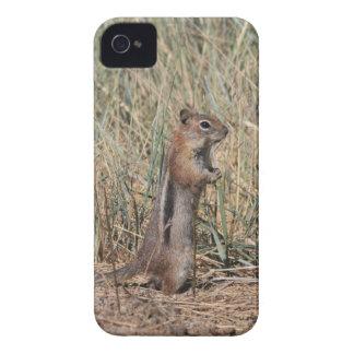 Coques iPhone 4 Écureuil moulu