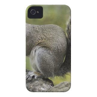 Coques iPhone 4 Écureuil tenant l'écrou pendant la journée