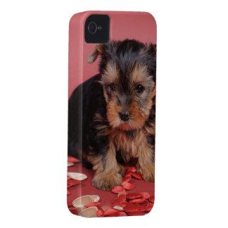 Coques iPhone 4 Portrait de chiot de chien de terrier de Yorkshire