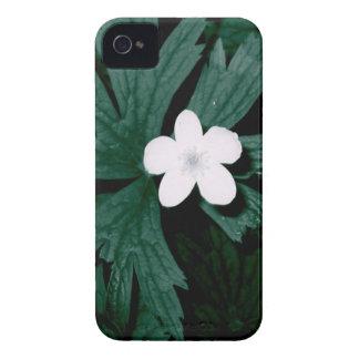 Coques iPhone 4 Série fleur blanche