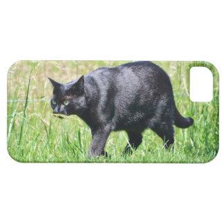 Coques iPhone 5 Chat noir dans la caisse de l'iPhone 5 d'herbe