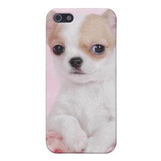 Coques iPhone 5 Chiot de chiwawa