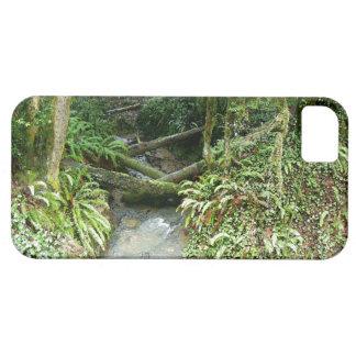 Coques iPhone 5 La forêt en bois de fougère laisse à l'Orégon la
