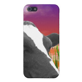 Coques iPhone 5 Vache sur l'herbe et le ciel vif de coucher du