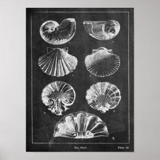 coquillages botaniques français côtiers de tableau