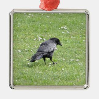 Corneille de charogne noire ornement carré argenté