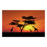 Coucher du soleil africain posters