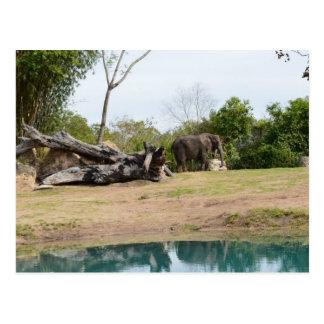 Courrier d'éléphant carte postale