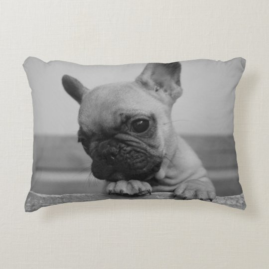 coussin frenchie puppy
