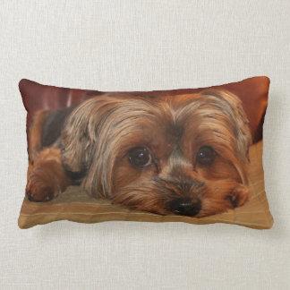 Coussin lombaire de Yorkshire Terrier