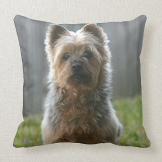 Coussin Terrier soyeux australien