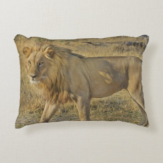Coussins Décoratifs Beau mâle de lion marchant sur la savane
