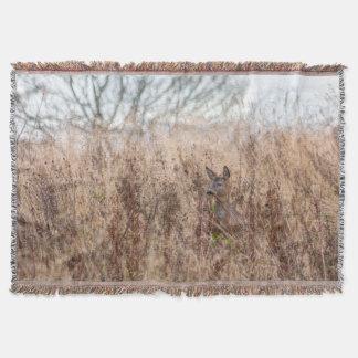 couverture de photographie de cerfs communs