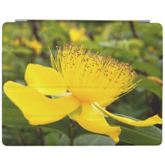 Couverture d'iPad de Calcyinum de Hypericum Protection iPad