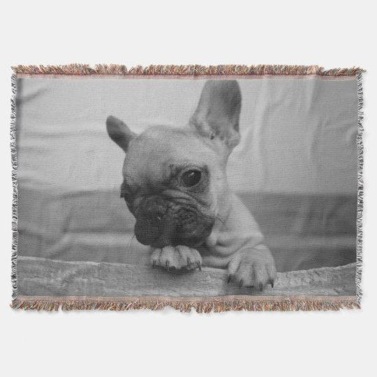 couverture Galaxie puppy
