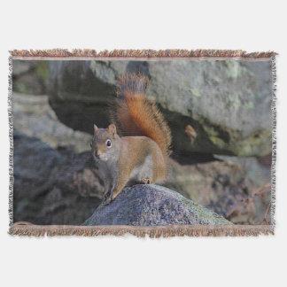 Couvertures Écureuil rouge sur un mur de roche