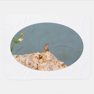Couvertures Pour Bébé anole brun sur la roche trouée avec le lézard de