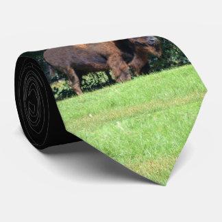 Cravate Buffalo (bison) le Kansas, l'Oklahoma, Wyoming