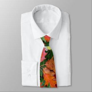 Cravate pour la copie de feuille d'érable de chêne