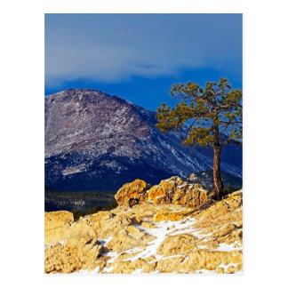 Crête de brochets et arbre solitaire carte postale