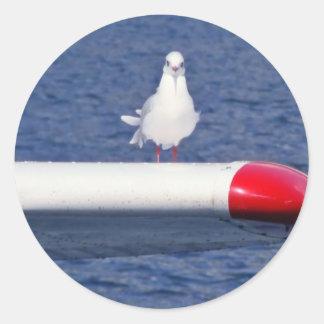 Cute White Seagull - Sticker
