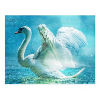 Cygne blanc sous la pluie cartes postales