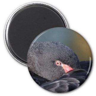 Cygne noir de sommeil aimant