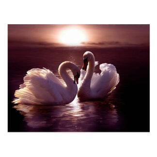 Cygnes affectueux formant un coeur carte postale