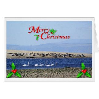 Cygnes et joints sur une carte de Noël