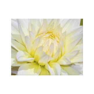 Dahlia blanc merveilleux toiles