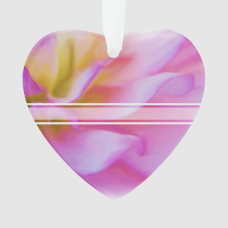 Dahlia rose de fleur