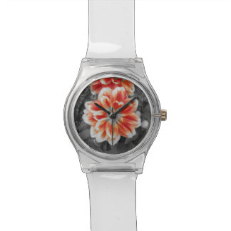 Dahlias ardents montres