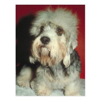 Dandie Dinmont Terrier Carte Postale