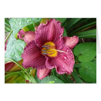 Daylily magenta pluvieux carte de vœux