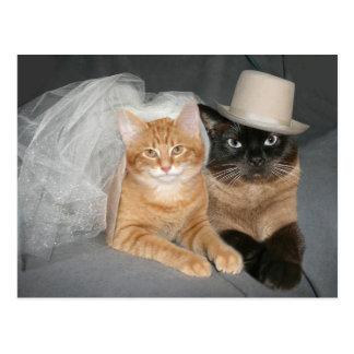 De Bruid en de Bruidegom van het kat Briefkaart