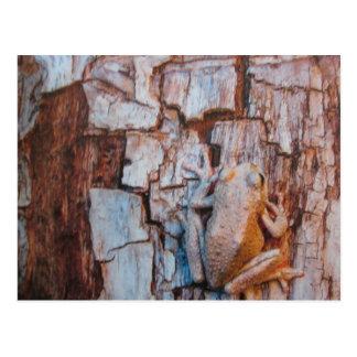 De canyon-grenouille carte postale