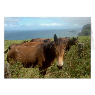 De Fotografie van het paard Briefkaarten 0