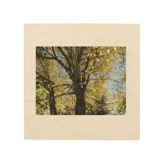 De gouden Bladeren van de Herfst op Houten Canvas