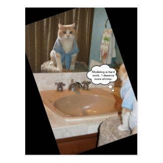 De grappige Bevestiging van de Kat over een Briefkaart