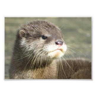 De leuke Otter van het Baby Foto Afdruk