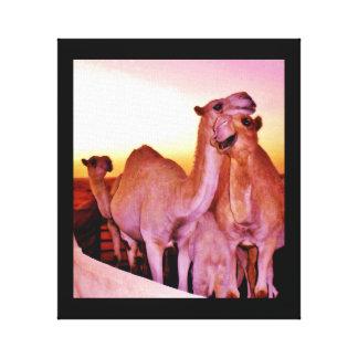 De Liefde van de kameel Canvas Afdruk
