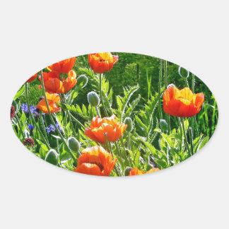 De mooie oranje druk van de papaverbloem ovale sticker