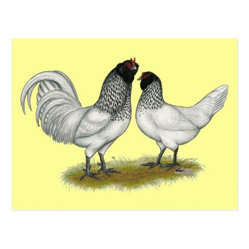 Nederlandse Kippen de Nederlandse Kippen Van de